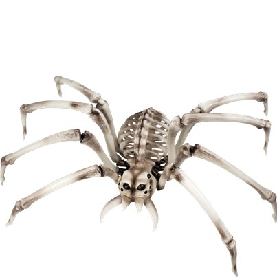 Giant Spider Skeleton (84cm)